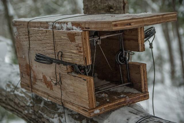 piège fait par un chasseur