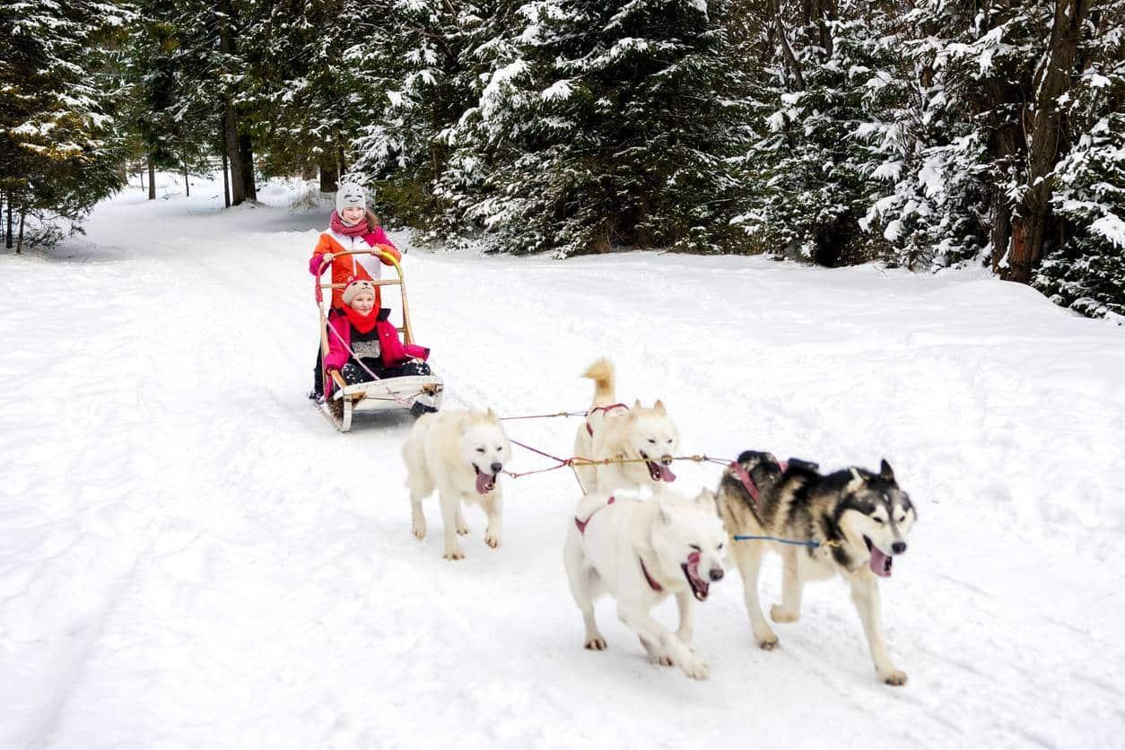 balade chiens de traineaux Canada